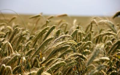 Taloushallinta maatalouksille