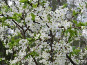 Keväinen tervehdys